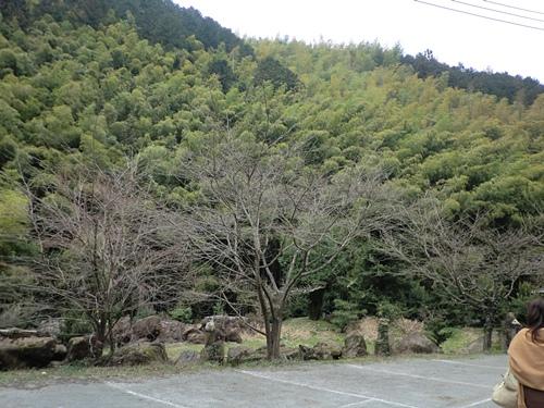 201203087717.jpg