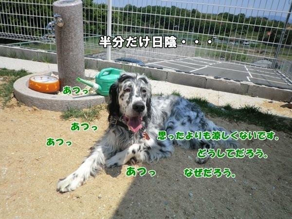 201205058278a.jpg