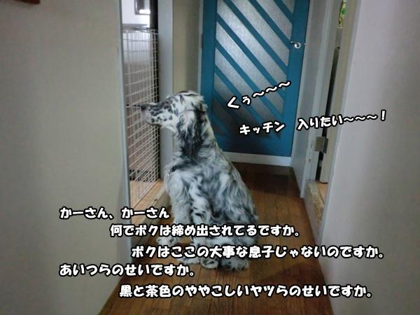 201205158369.jpg