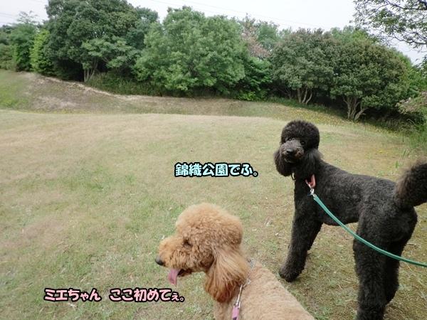 201205298427.jpg