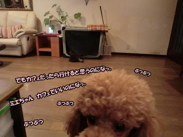 CIMG006420121111.jpg