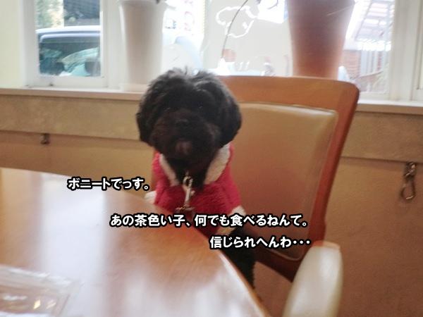 CIMG010320121114.jpg