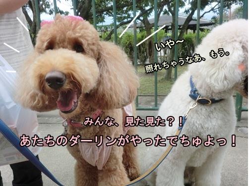 CIMG012320120927.jpg