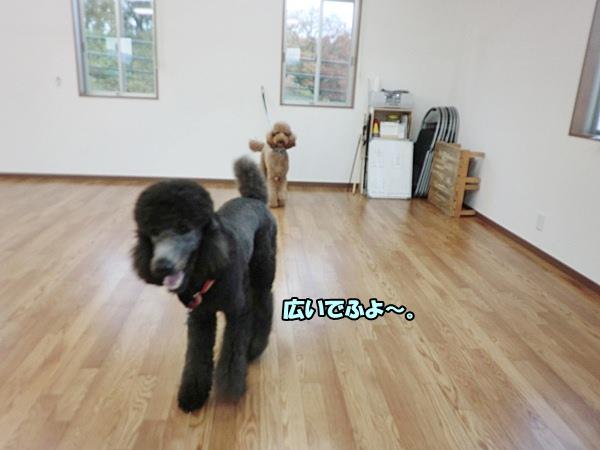 CIMG0297201212107.jpg