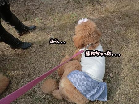 CIMG4605.jpg