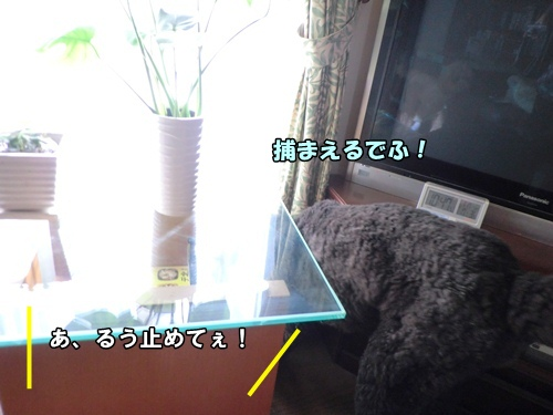 CIMG5897a.jpg