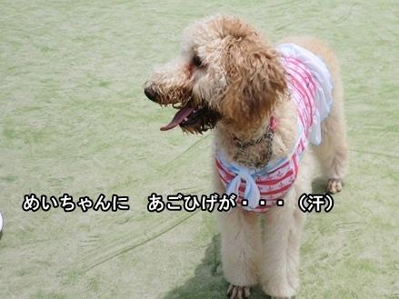 CIMG959720120716.jpg