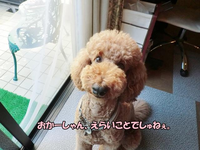 CIMG975320120903.jpg