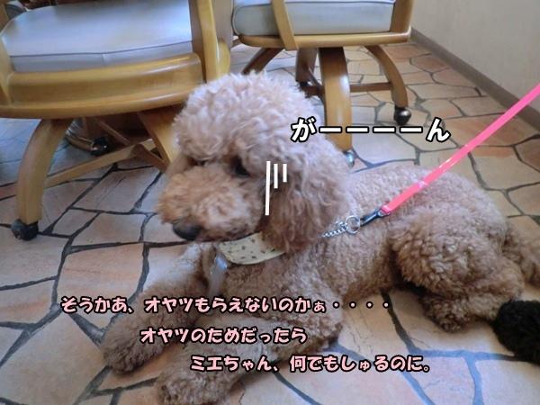 CIMG976220120805a.jpg