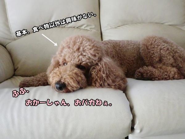 CIMG977620120907.jpg