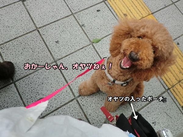 CIMG979920120811.jpg