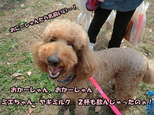 CIMG981120121105.jpg