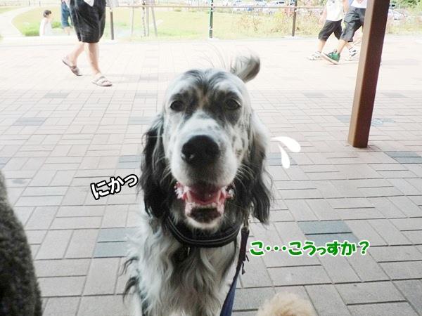 CIMG982720120812.jpg