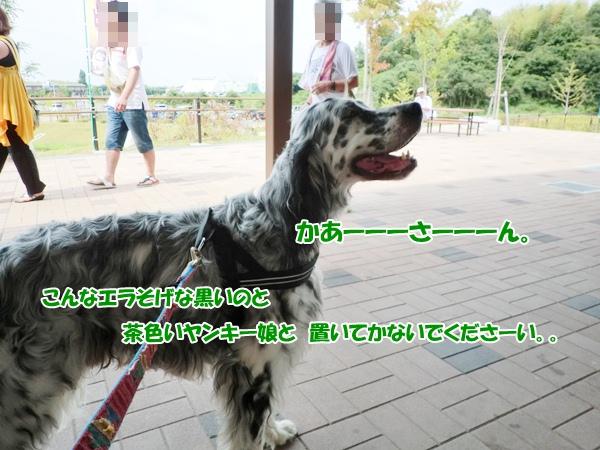 CIMG9833a20120812.jpg
