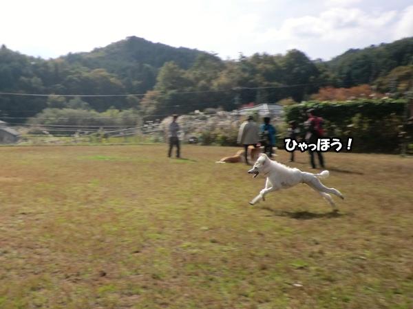 CIMG986120121106.jpg