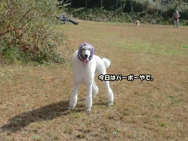 CIMG988020121106.jpg