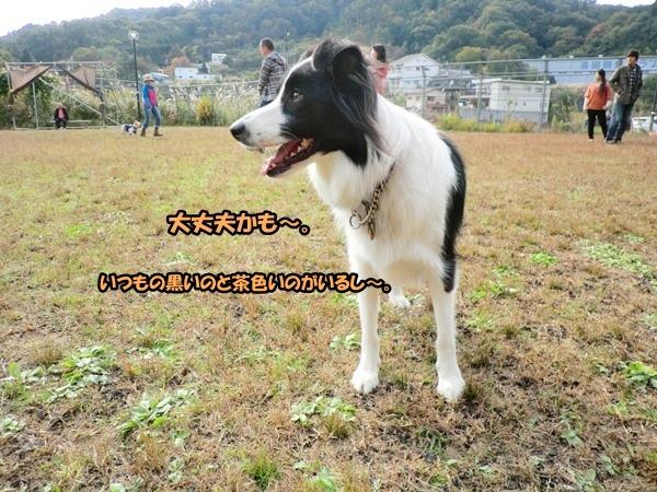 CIMG989520121106ab.jpg