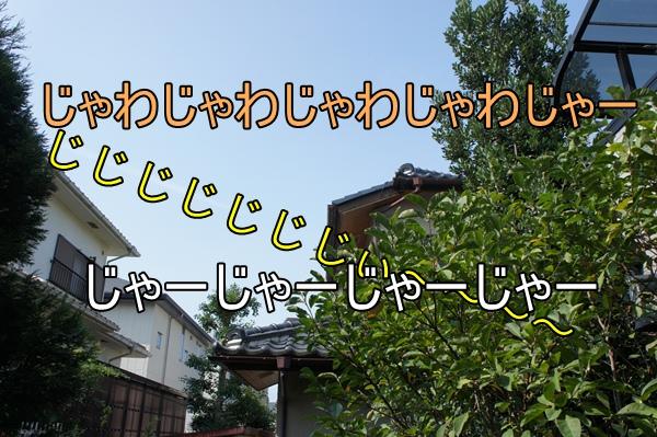DSC04486a.jpg