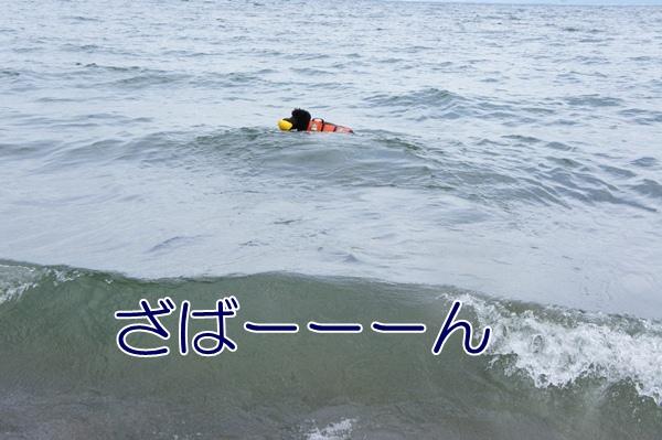 DSC0549920120910.jpg