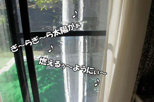 DSC0560820120913.jpg