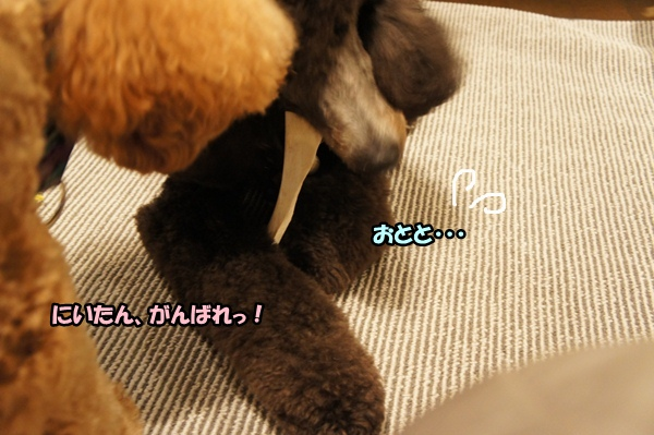 DSC0598720121119.jpg