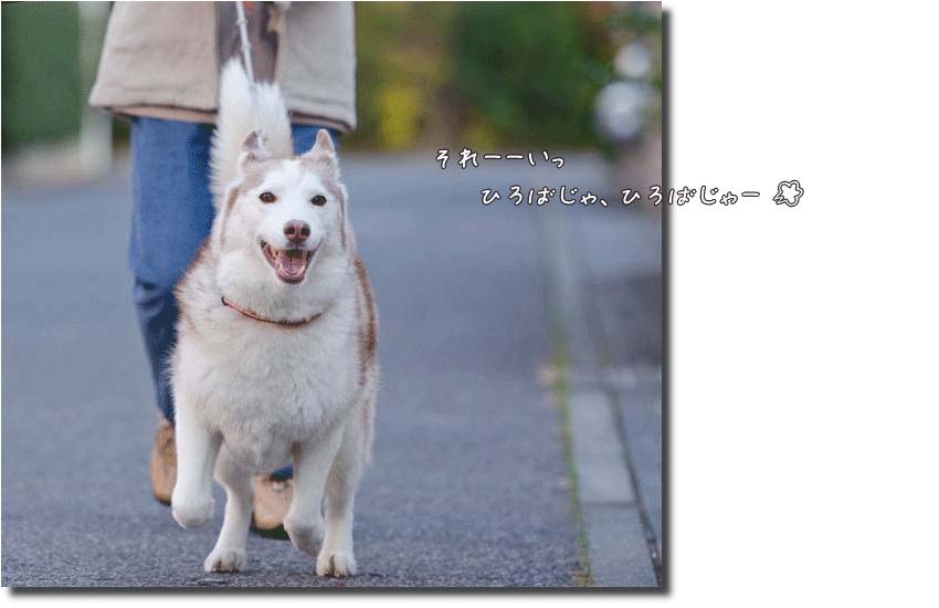DSC_0751k1
