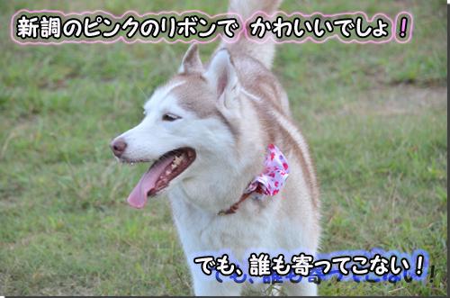 CSC_0607-1.jpg