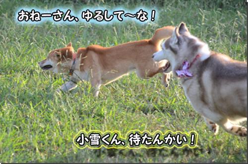CSC_0630-1.jpg