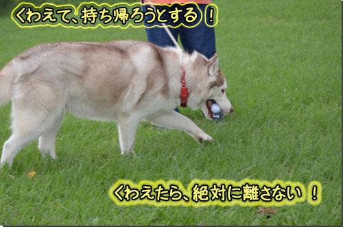 DSC_0096-1_edited-1.jpg