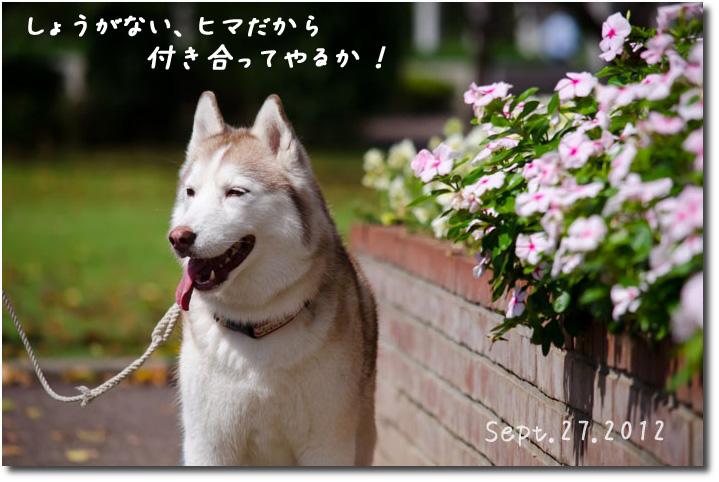 DSC_0130j1.jpg