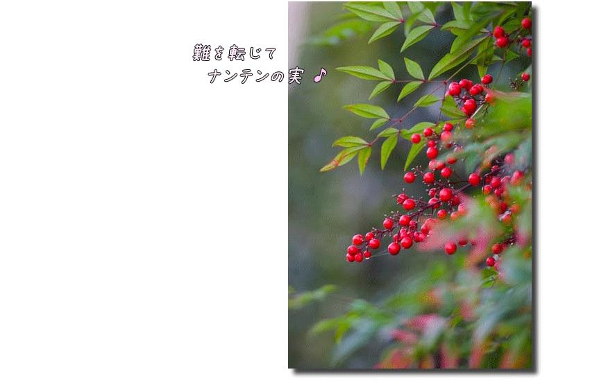 DSC_0191k2.png