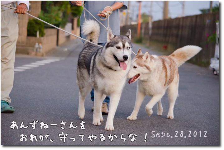 DSC_0411j1.jpg