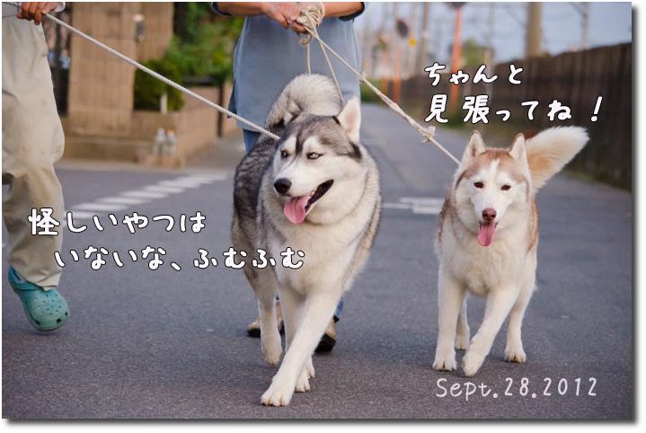DSC_0412j1.jpg