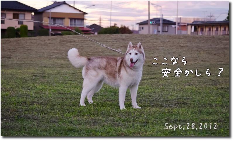 DSC_0464j1.jpg