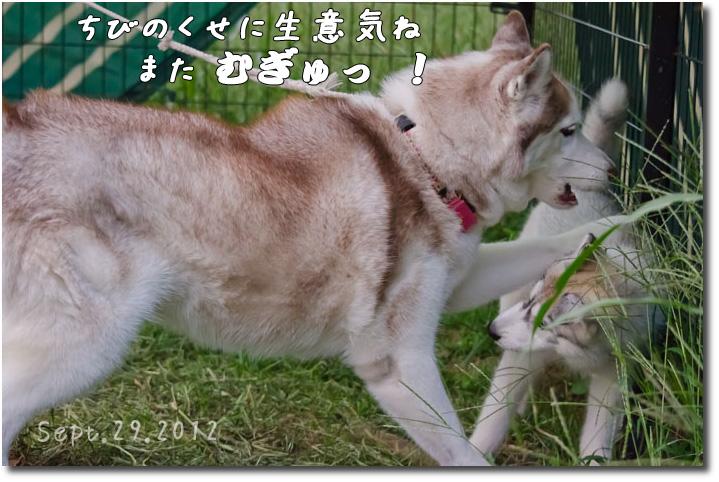 DSC_0676j1.jpg