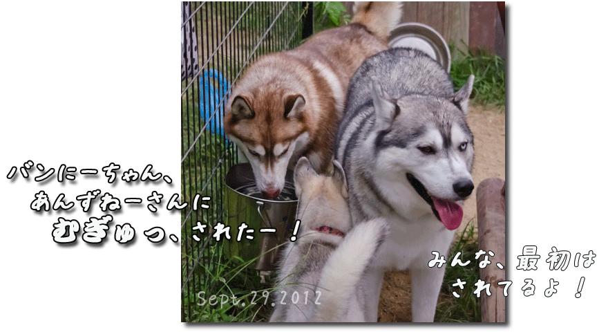 DSC_0679j1.png