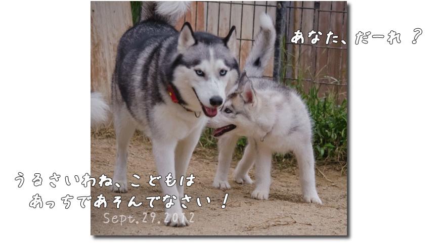 DSC_0683j1.png