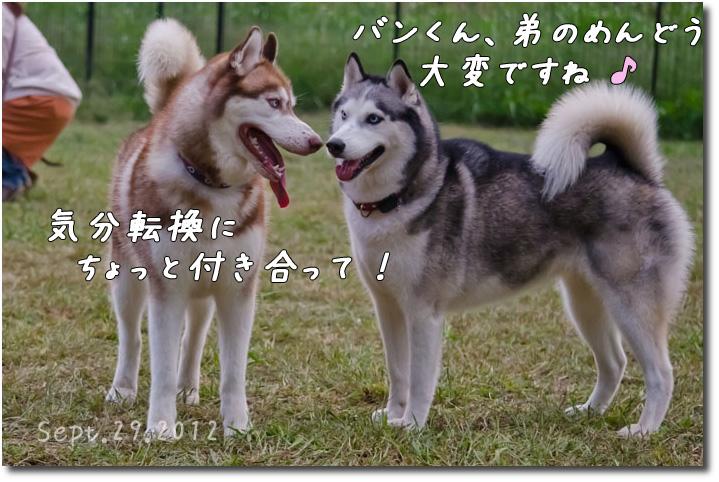 DSC_0684j1.jpg