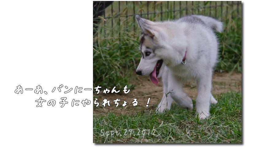 DSC_0740j1.png