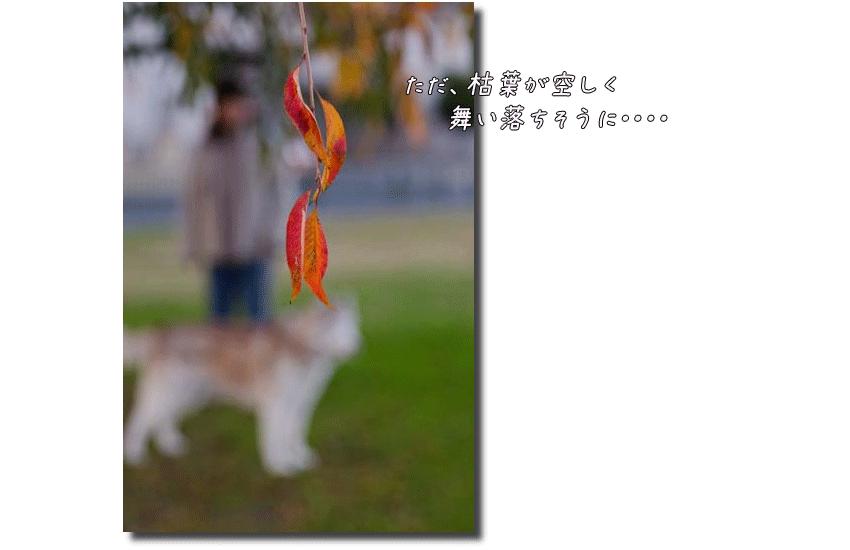 DSC_0816k1.png