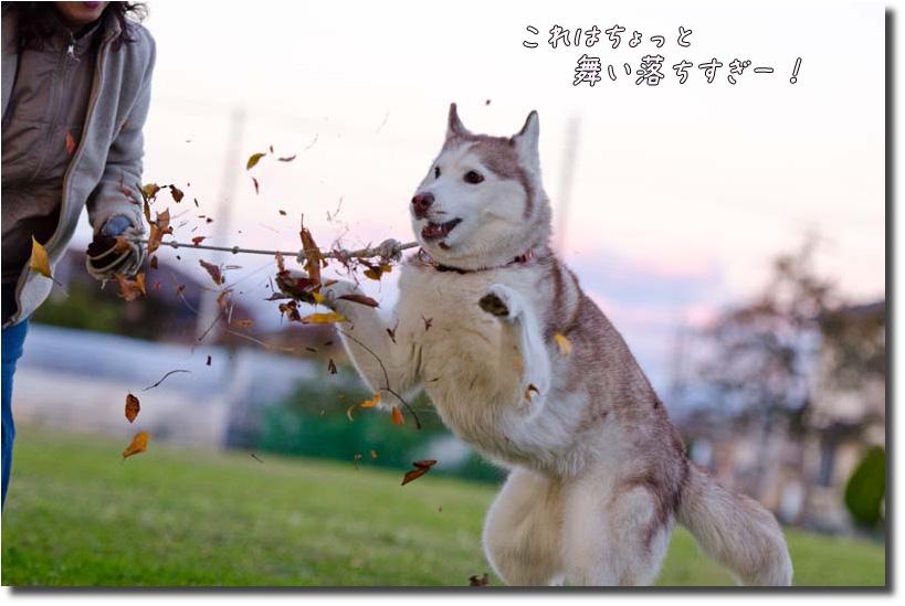 DSC_0823k1.jpg