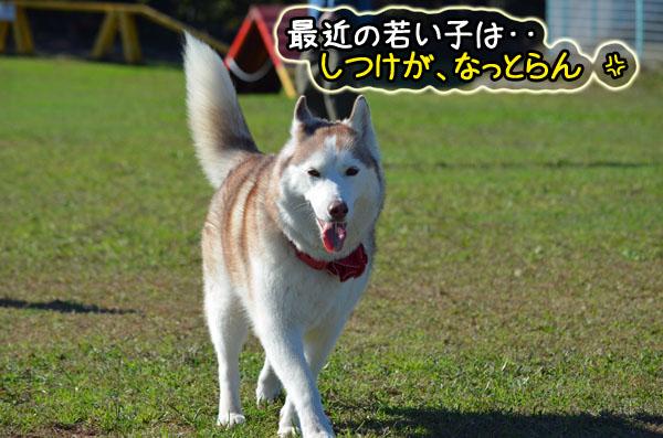 DSC_0911-5.jpg