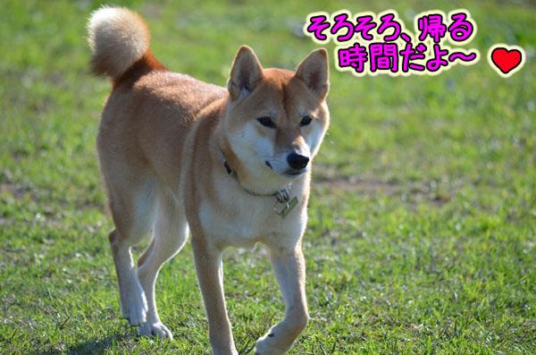 DSC_1069-5.jpg