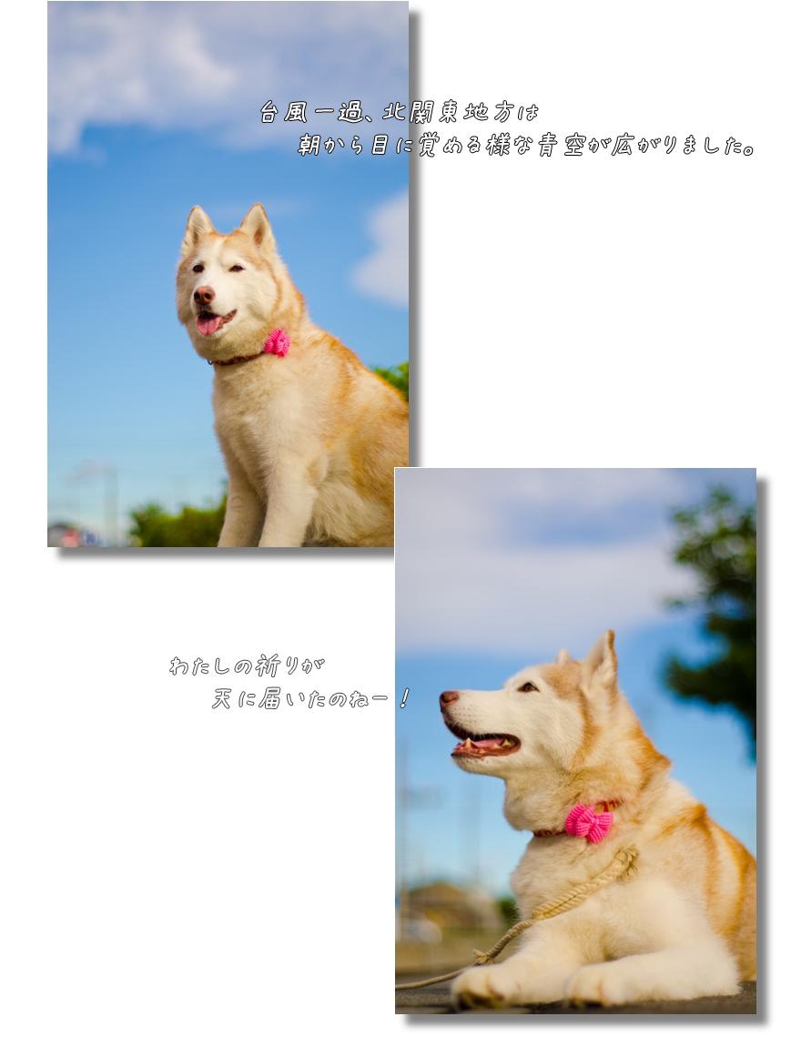 DSC_1290g1.jpg