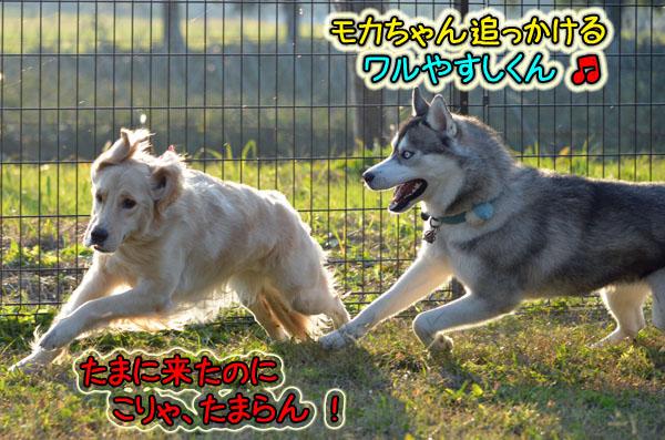 DSC_1306-8.jpg