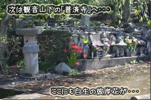 DSC_1423-1.jpg