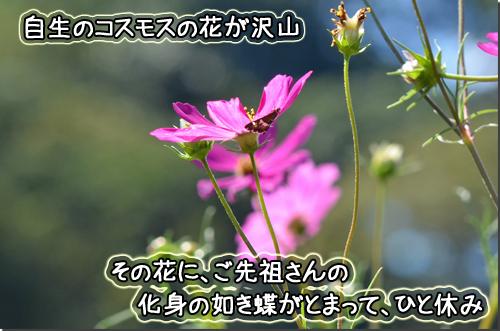 DSC_1425-1.jpg