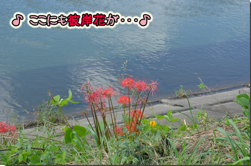 DSC_1453-1.jpg