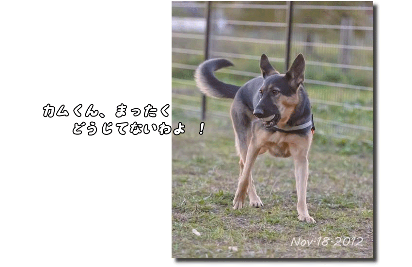 DSC_1701k1.png