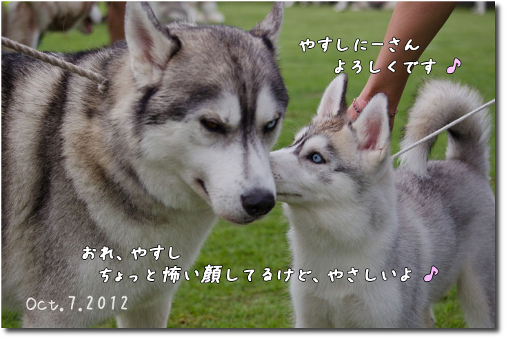 DSC_2464j1.jpg